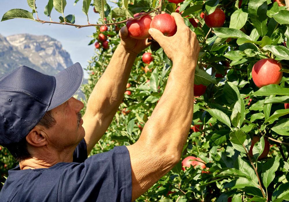 Per alzare l'asticella della qualità e della sostenibilità in agricoltura
