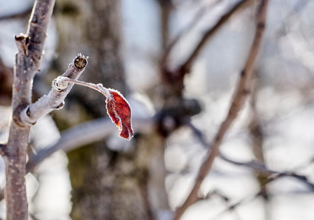 Impariamo dal riposo vegetativo dei meli: ogni tanto è bene rallentare