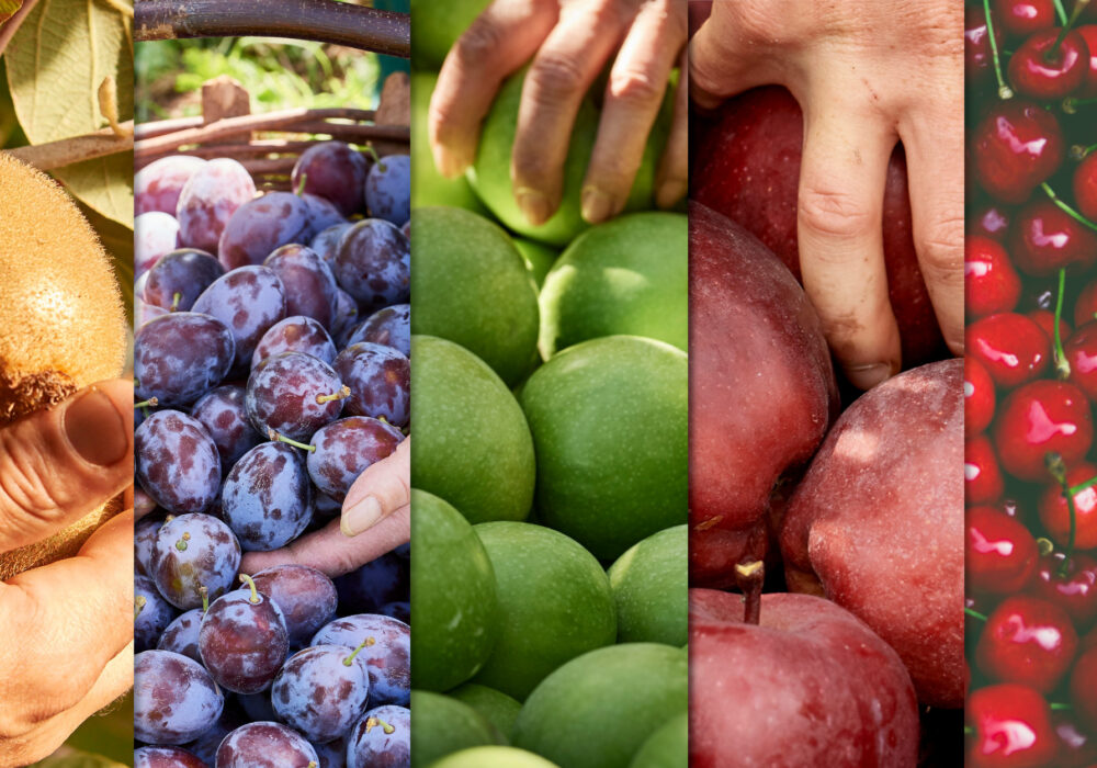 COLORI E VALORI NUTRIZIONALI DELLA FRUTTA (#IYFV – ANNO INTERNAZIONALE DELLA FRUTTA E DELLA VERDURA)