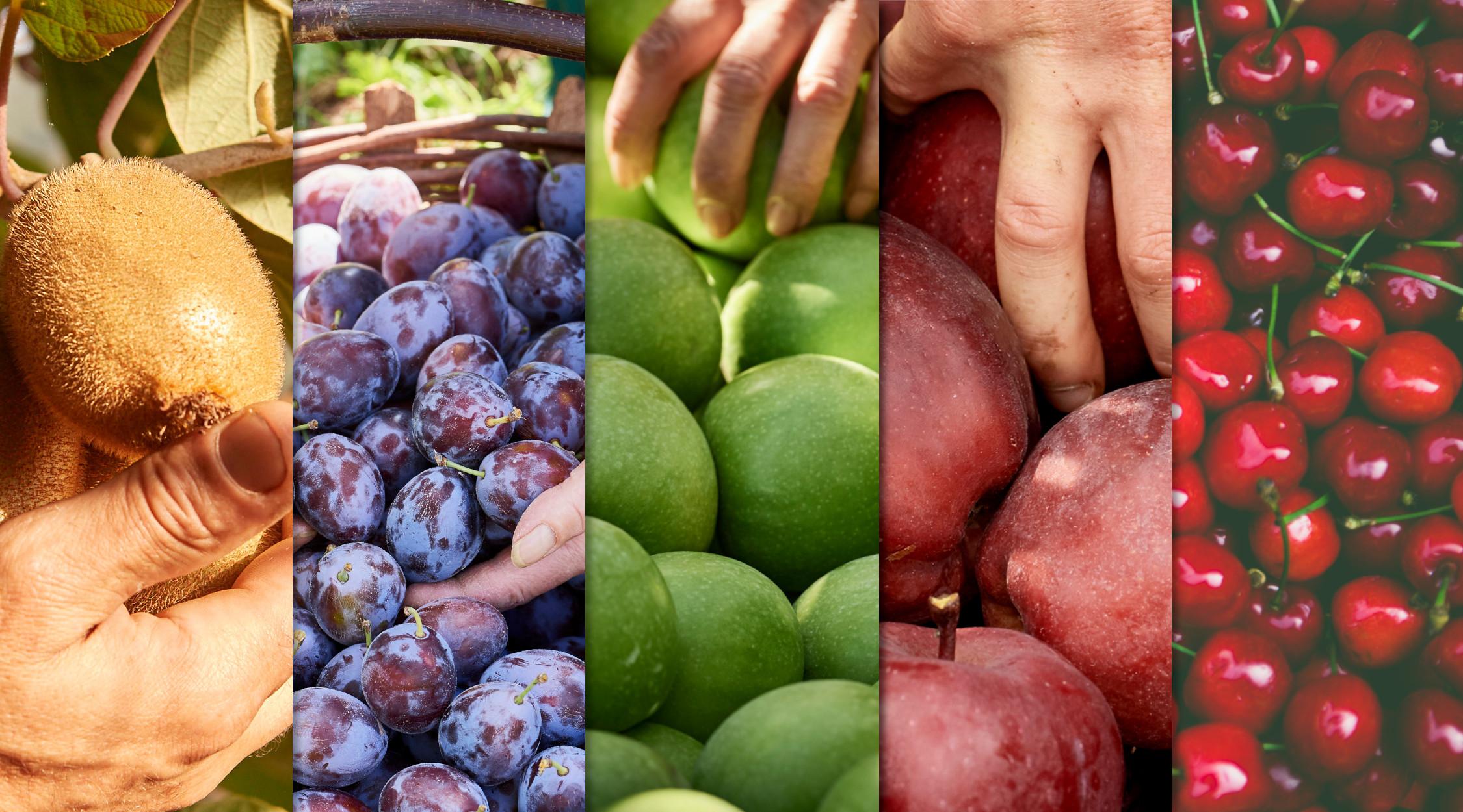 Colori e valori nutrizionali della frutta (IYFV) | La Trentina