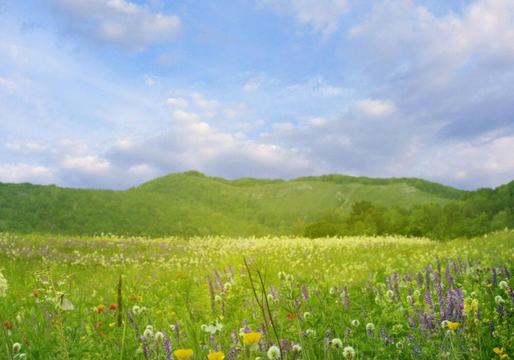 Un giardino di erbe e fiori, grande come il Trentino