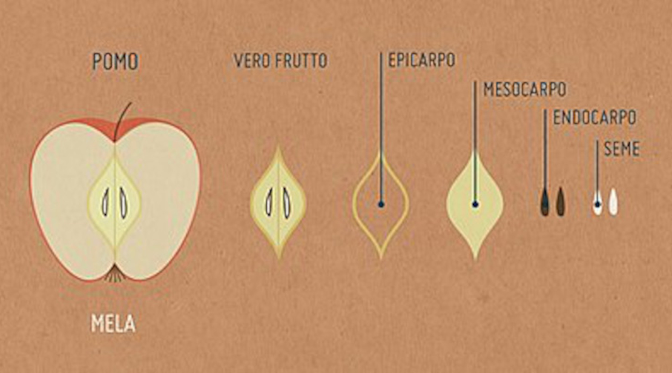 Fioritura dei meli in Trentino | La Trentina