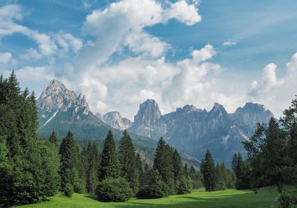 La foresta dei violini di Paneveggio e il Bosco che suona in Val di Fiemme: alla scoperta degli abeti rossi di risonanza